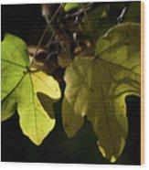 Maple Wood Print