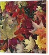 Maple Leaf Colors Wood Print