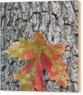 Maple Leaf On A Maple Tree Wood Print