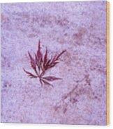 Maple Leaf On Rock Wood Print
