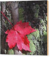 Maple Leaf Still Life Wood Print