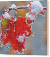 Maple Leaf With Snow Wood Print
