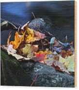 Maple Leaves-0004 Wood Print