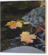 Maple Leaves-0006 Wood Print