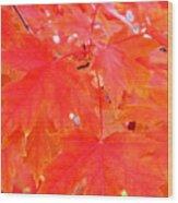Maple Leaves 3 Pd  Wood Print