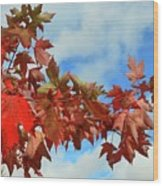 Maple Leaves Against The Sky  Wood Print