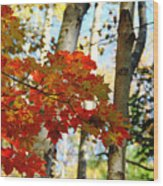 Maple Leaves And Birch Bark Wood Print