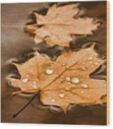 Maple Leaves And Drops Pnt Wood Print