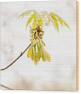 Maple Leaves And Fruits Wood Print