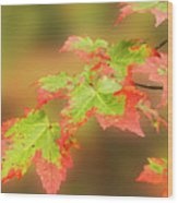 Maple Leaves Changing Wood Print