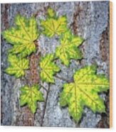 Maple Mania 12 Wood Print