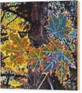 Maple Mania 14 Wood Print