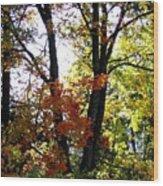 Maple Mania 16 Wood Print