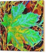 Maple Mania 21 Wood Print by Will Borden