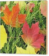 Maple Mania 5 Wood Print