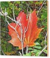 Maple Mania 6 Wood Print