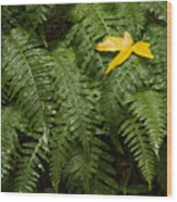 Maple On Fern Wood Print