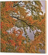 Maple Over The River Wood Print