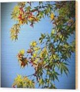 Maple Seeds In September Wood Print