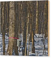 Maple Sirup Hdr No1 Wood Print
