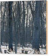 Maple Sirup Infrared N01 Wood Print