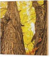 Maple Tree 3 Wood Print