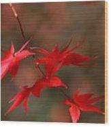 Maple Tree Leaves II Wood Print