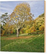 Maple Tree On The Slope. Wood Print