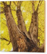 Maple Tree Portrait 2 Wood Print