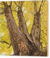 Maple Tree Portrait Wood Print