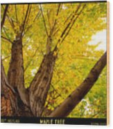 Maple Tree Poster Wood Print