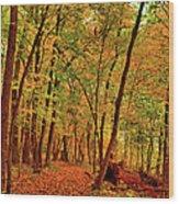 Maple Woods Trail 2 Wood Print