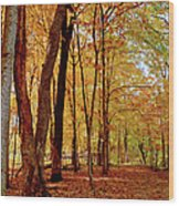 Maple Woods Trail 3 Wood Print