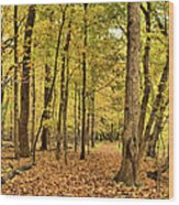 Maple Woods Trail Wood Print