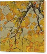 Maples In Autumn Wood Print by Carolyn Doe