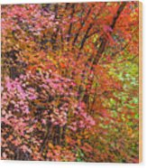 Maples In Pink Wood Print