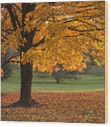 Maples Trees In Fall Wood Print