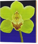 Mapplethorpe Flower Wood Print