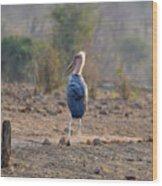 Marabou Stork Of Botswana Africa Wood Print