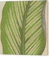 Maranta Alba Lineata Wood Print