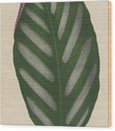 Maranta Porteana Wood Print