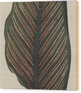 Maranta Regalis Wood Print