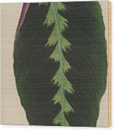 Maranta Warsewiczii Wood Print