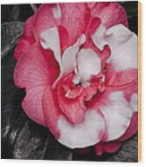 Marble Camellia Wood Print