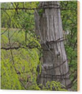 Marble Falls Texas Old Fence Post In Spring Wood Print