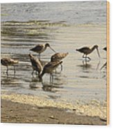 Marbled Godwit Birds At Sunset Wood Print