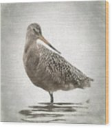 Marbled Godwit Wood Print