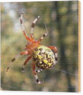 Marbled Orb Weaver Wood Print