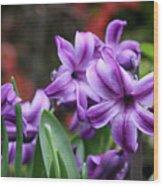 March Hyacinths Wood Print