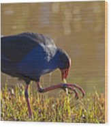 March Of The Swamphen Wood Print by Mike  Dawson